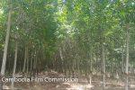 btb-rubber-plantations-03